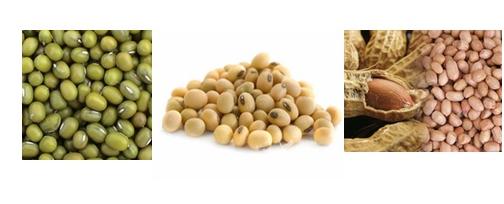 Mesin-Pulp-Grinder-Pembubur-Kacang-Kacangan-3-maksindobali (2)