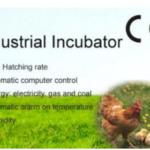 Jual Mesin Tetas Telur Industri 1056 Butir (Industrial Incubator) di Bali